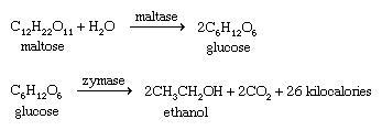معادله واکنش تولید اتانول