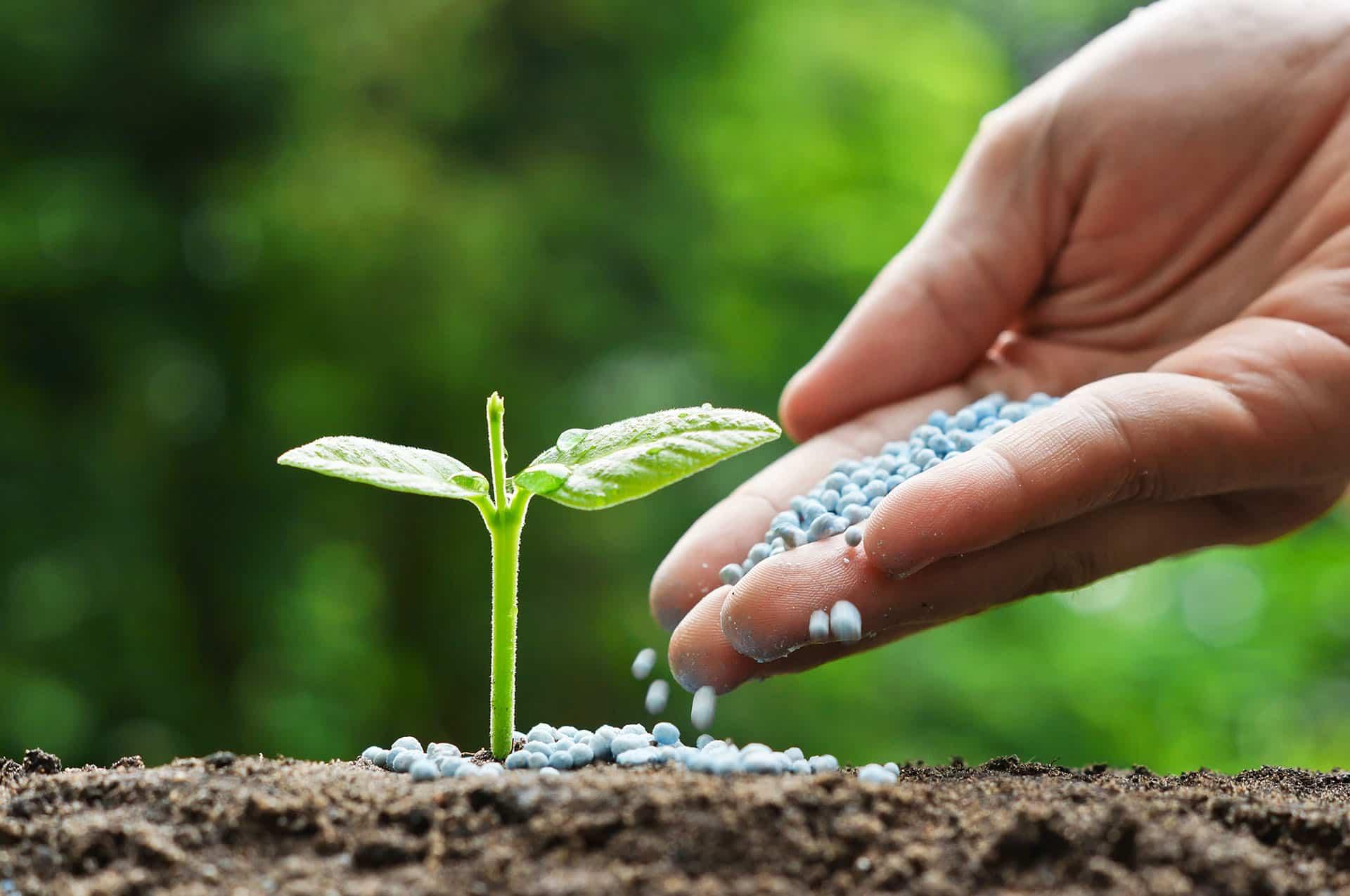 استفاده کلسیم نیترات در کشاورزی