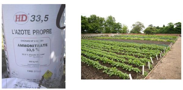 نیترات آمونیوم در کشاورزی