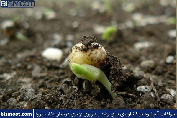 کاربرد های سولفات آمونیوم در کشاورزی که برای این کار خرید بالایی دارد