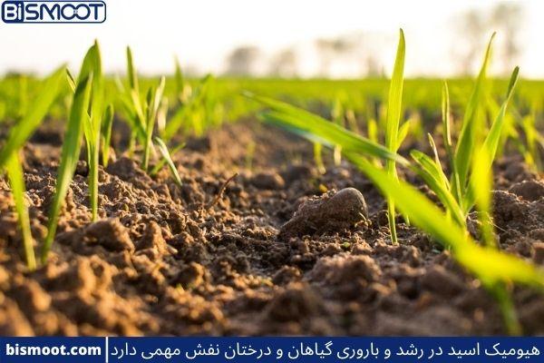 کاربرد های هیومیک اسید در کشاورزی
