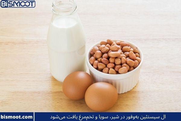 ال سیستئین بهوفور در شیر، سویا و تخممرغ یافت میشود